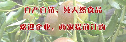 大荔冬枣网,陕西大荔冬枣