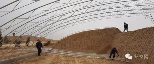 大荔冬枣的栽培技术